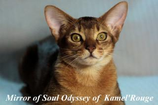 MIRROROFSOUL ODYSSEY OF KAMELROUGE