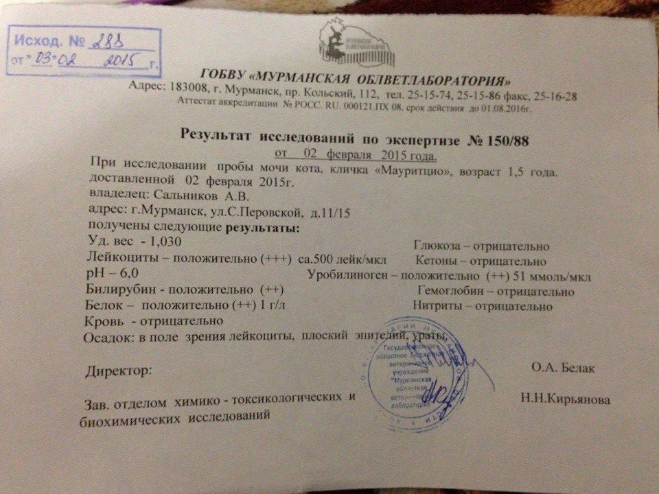 Справка из тубдиспансера Юго-Западный административный округ