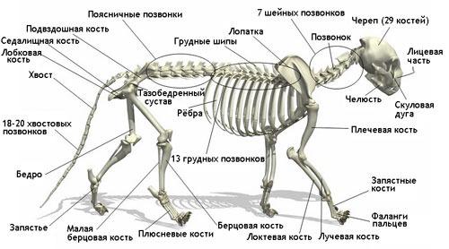 Запястный сустав кошки фото от сноуборда болит колено